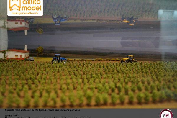 Maqueta automatizada de las viñas manchegas – ICRDO de La Mancha